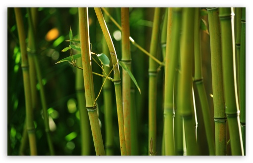 bamboo_stems-t2