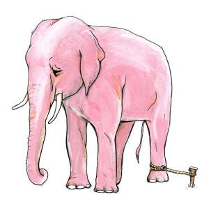 elephant_stake1