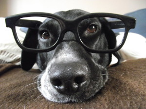 dog_with_glasses_by_danihee-d53949b