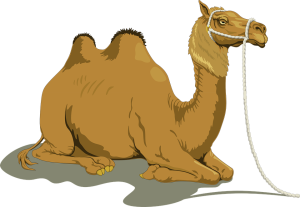 Den attende kamelen