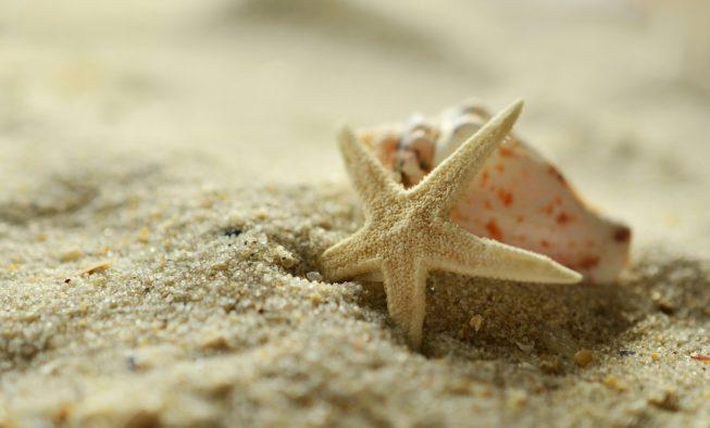 Å redde en sjøstjerne