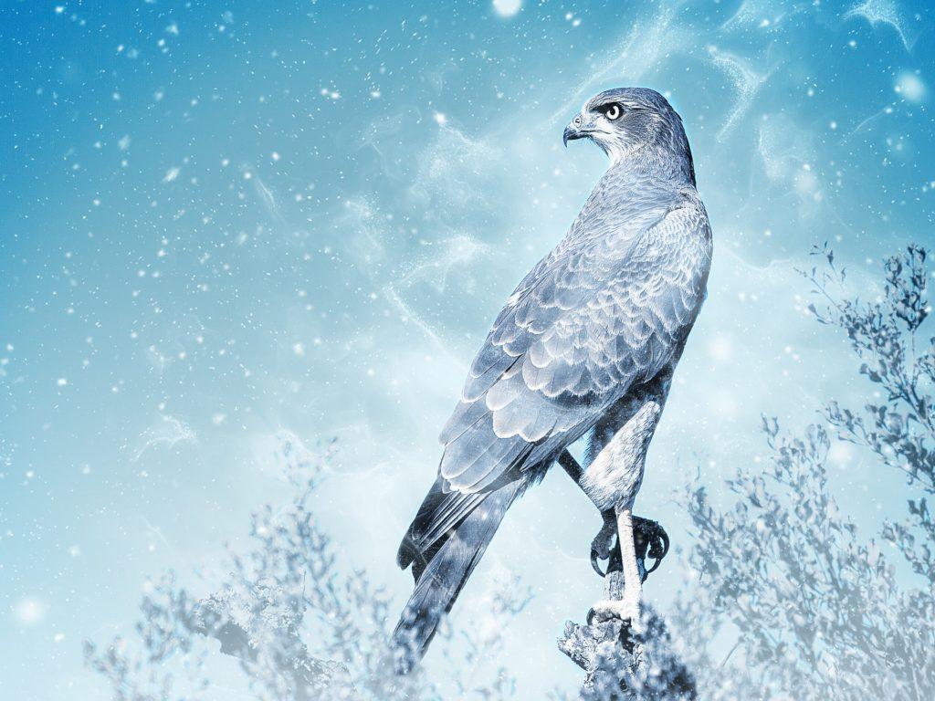bird-2233534_1920